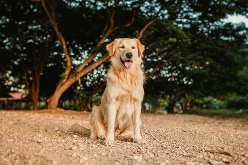 4 manieren waarop jouw huisdier kan profiteren van de dierenkliniek